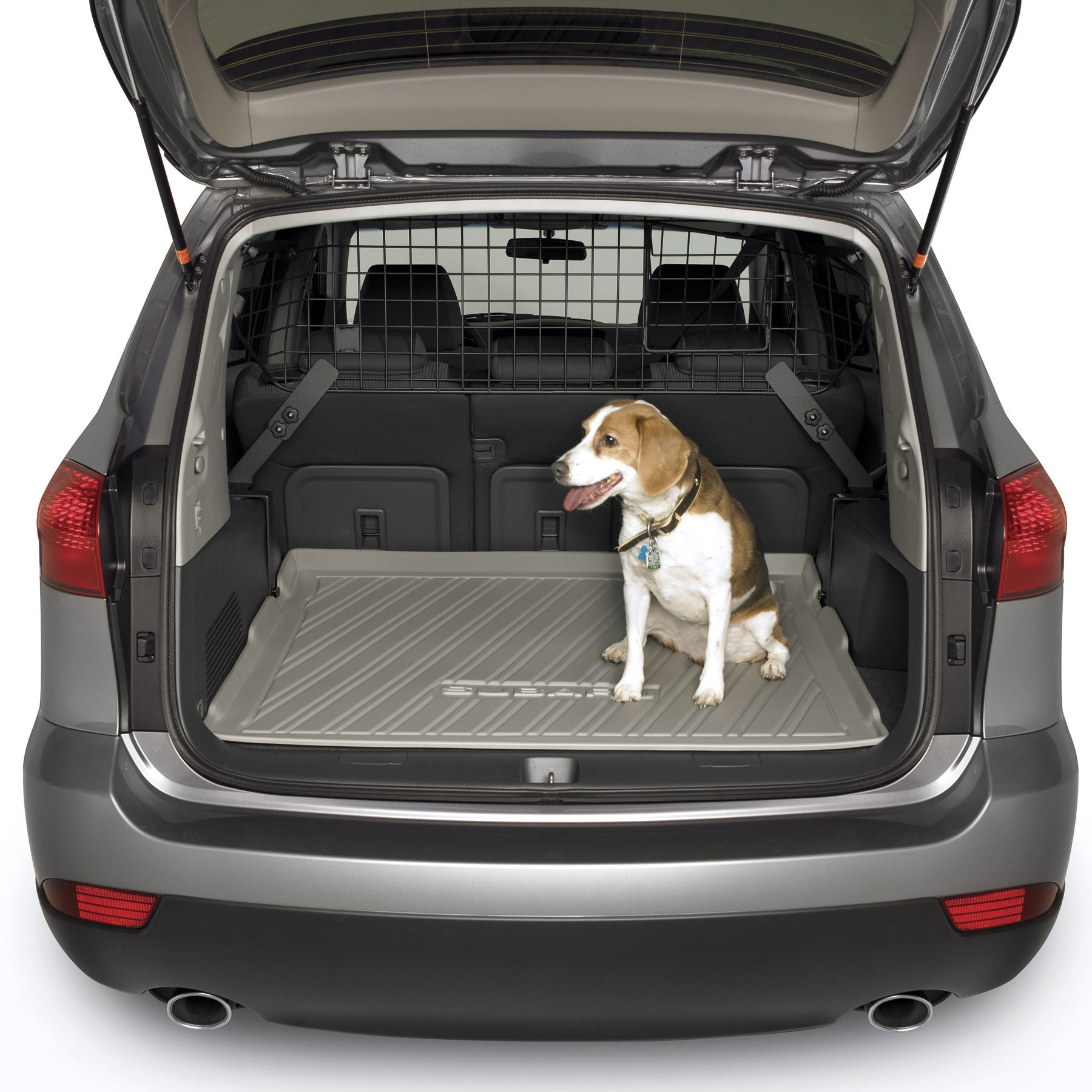 Dog Friendly Vehicles